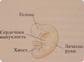 Беременность. Картинки с комментариями